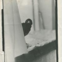 Varna_priajaukinta_foto_Kurhauze_1989.jpg